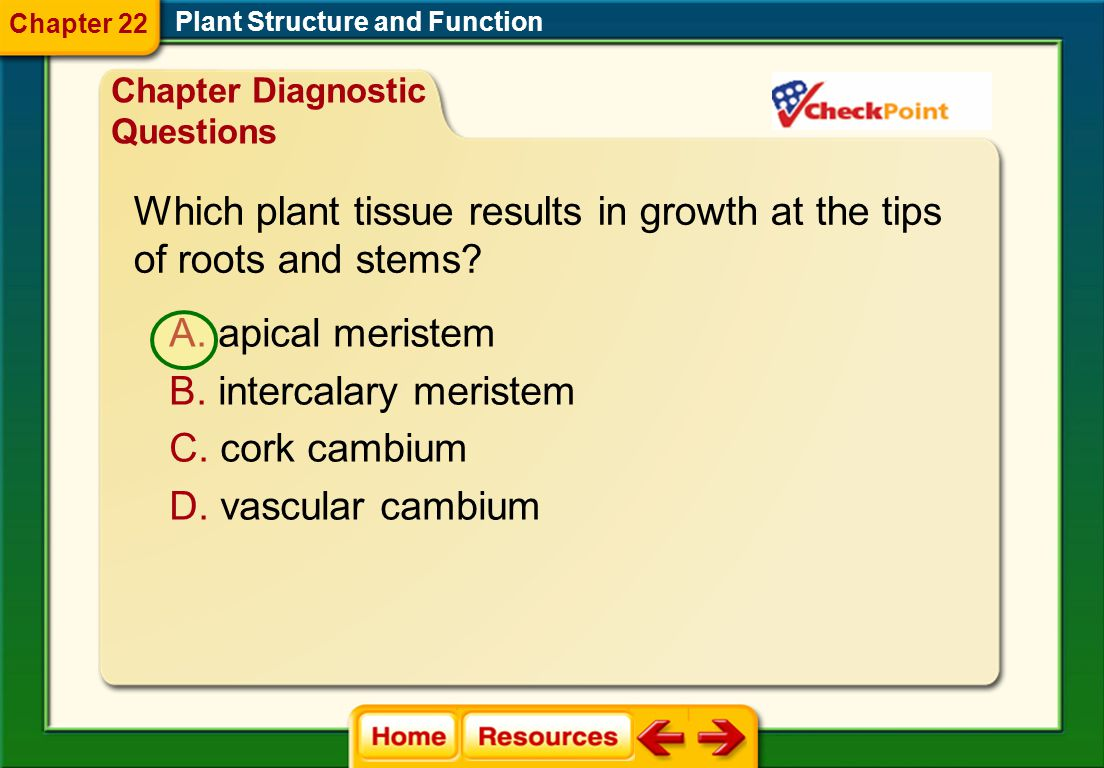 Which plant tissue results in growth at the tips of roots and stems