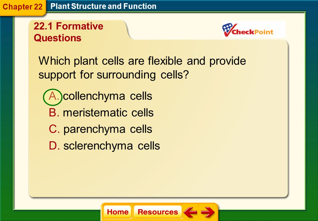 Which plant cells are flexible and provide