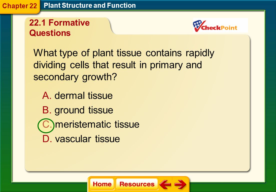 What type of plant tissue contains rapidly