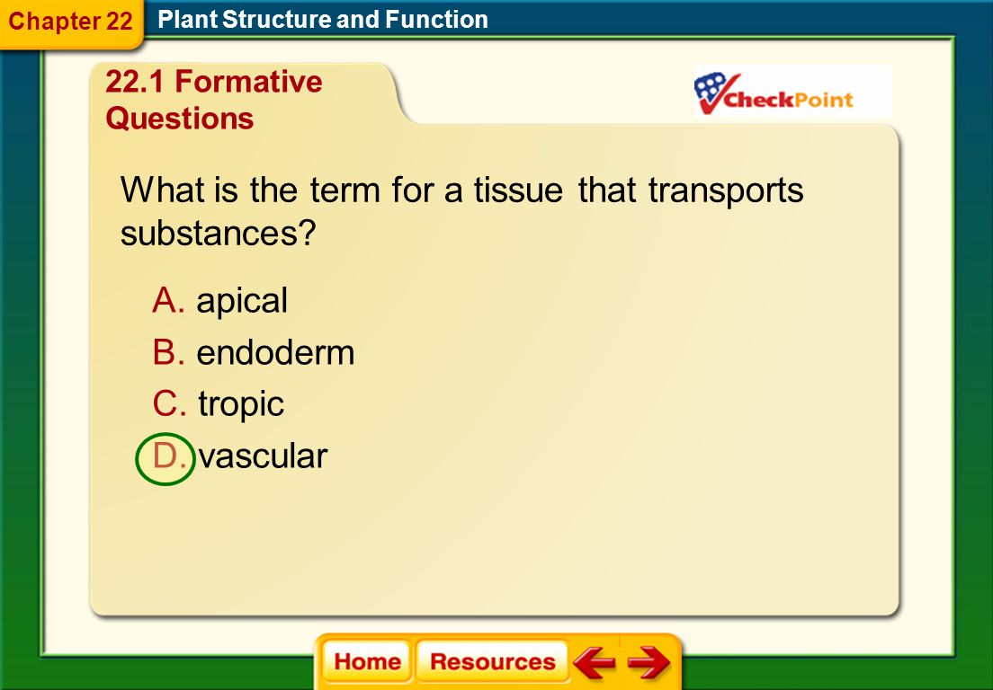 What is the term for a tissue that transports substances