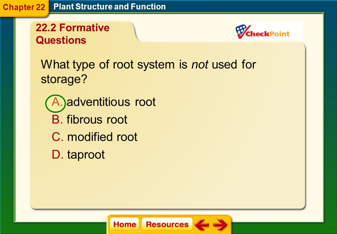What type of root system is not used for storage