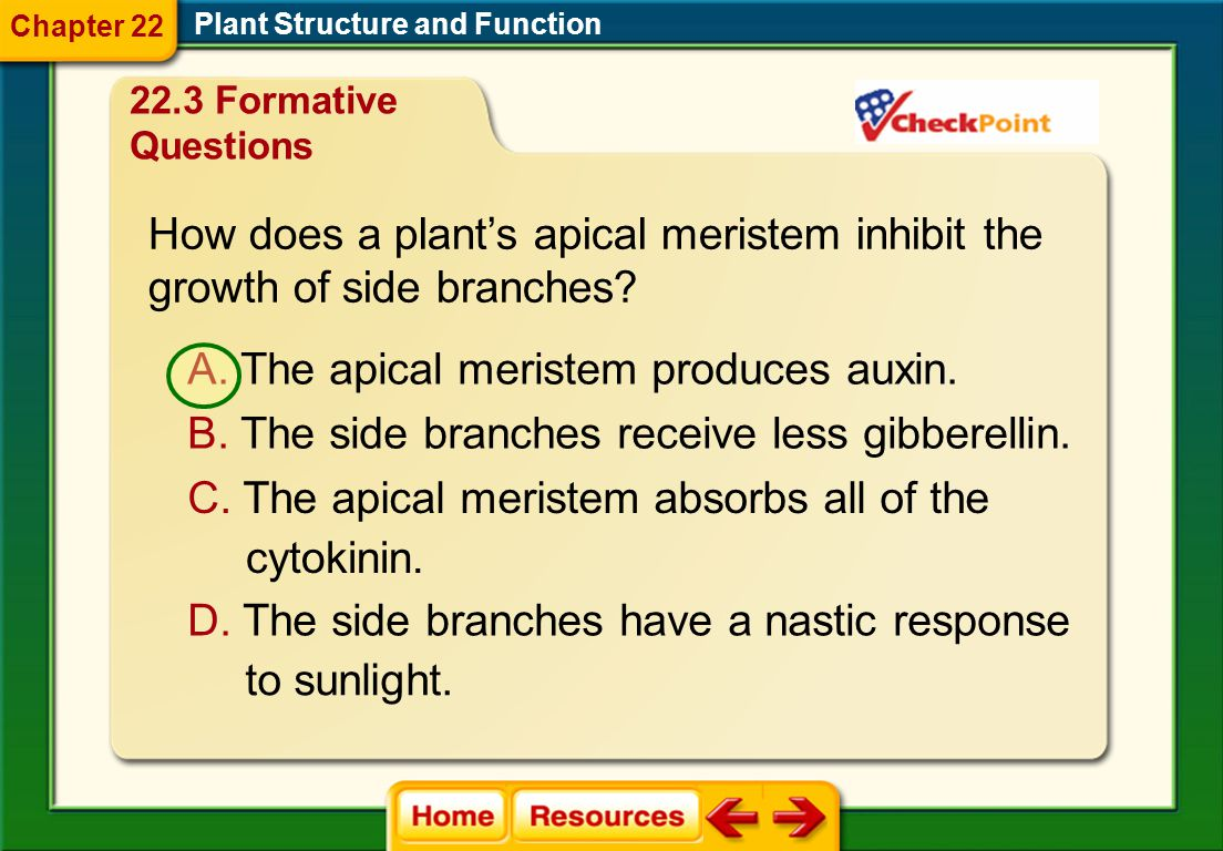 How does a plant's apical meristem inhibit the