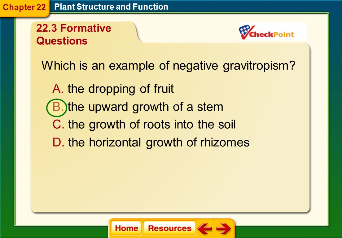 Which is an example of negative gravitropism
