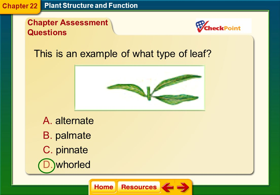 This is an example of what type of leaf