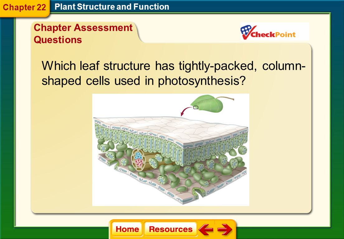 Which leaf structure has tightly-packed, column-