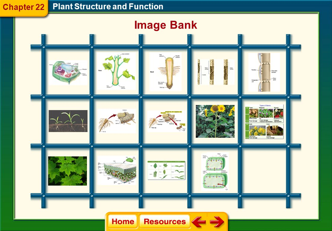 Chapter 22 Plant Structure and Function Image Bank