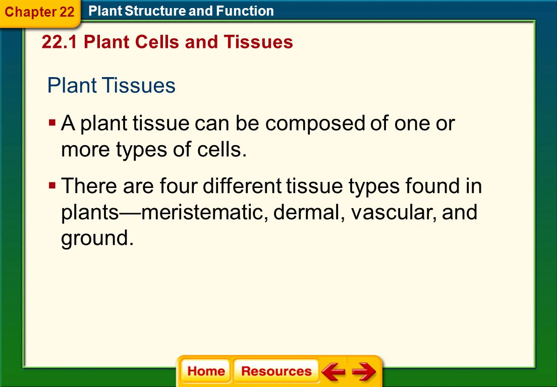 A plant tissue can be composed of one or more types of cells.