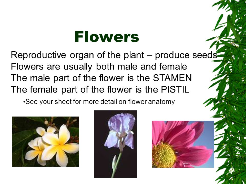 Flowers Reproductive organ of the plant – produce seeds