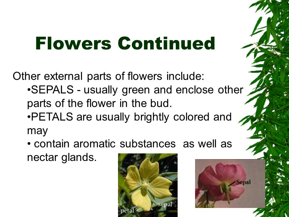 Flowers Continued Other external parts of flowers include: