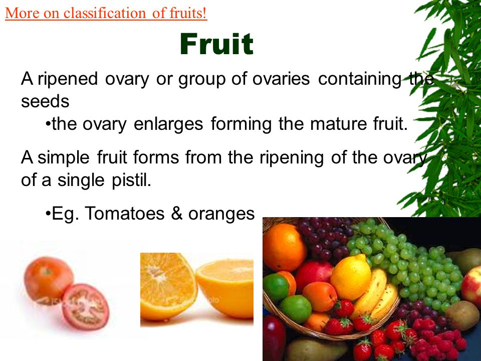 Fruit A ripened ovary or group of ovaries containing the seeds
