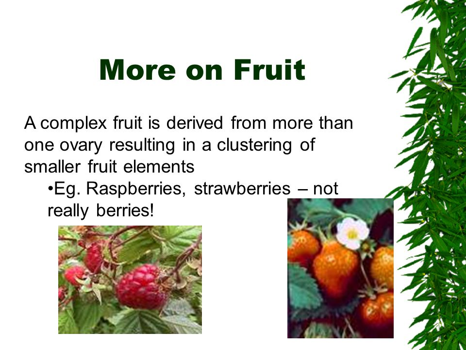 More on Fruit A complex fruit is derived from more than one ovary resulting in a clustering of smaller fruit elements.