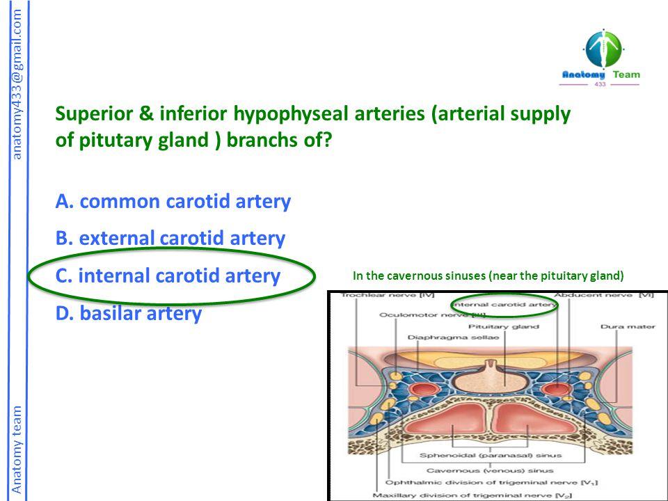 A. common carotid artery B. external carotid artery