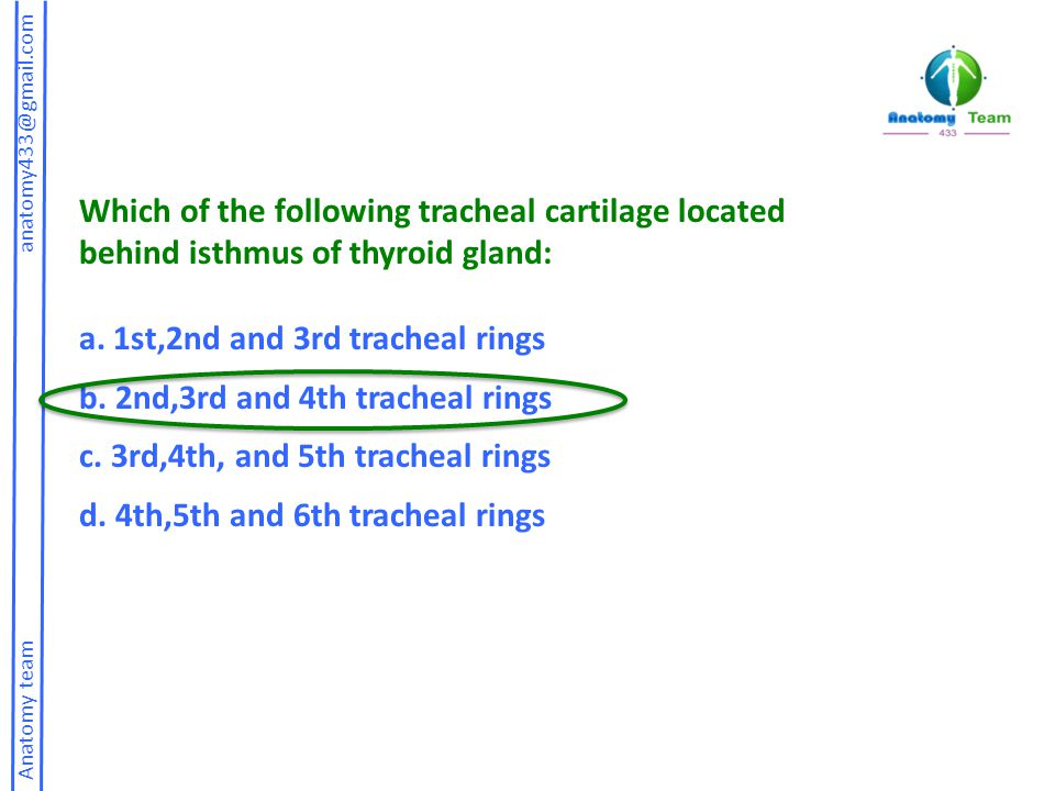 Which of the following tracheal cartilage located