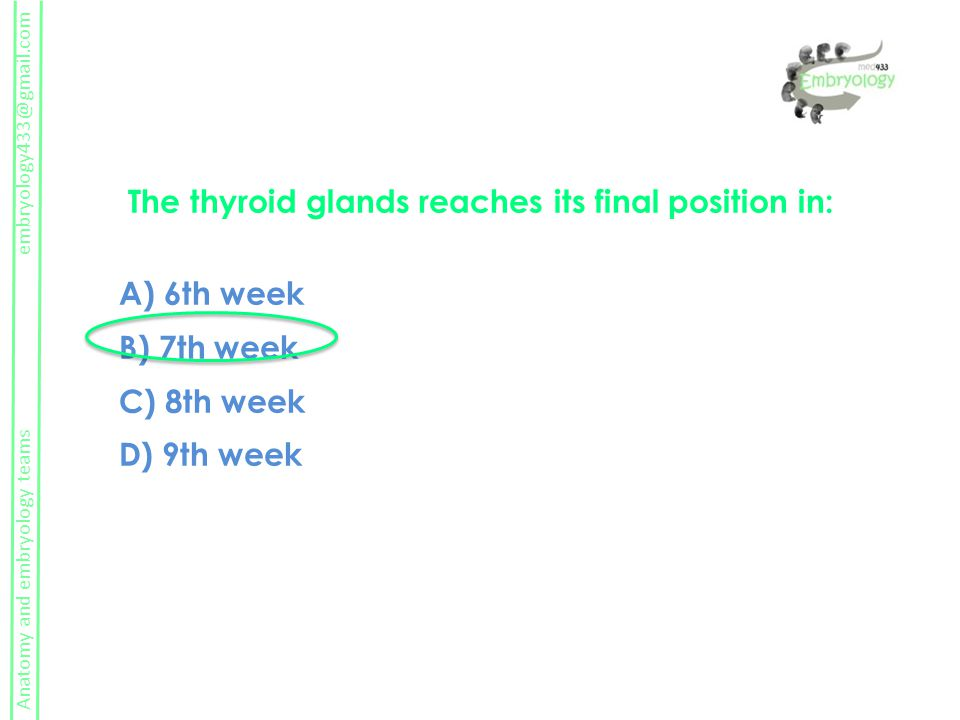 The thyroid glands reaches its final position in: A) 6th week