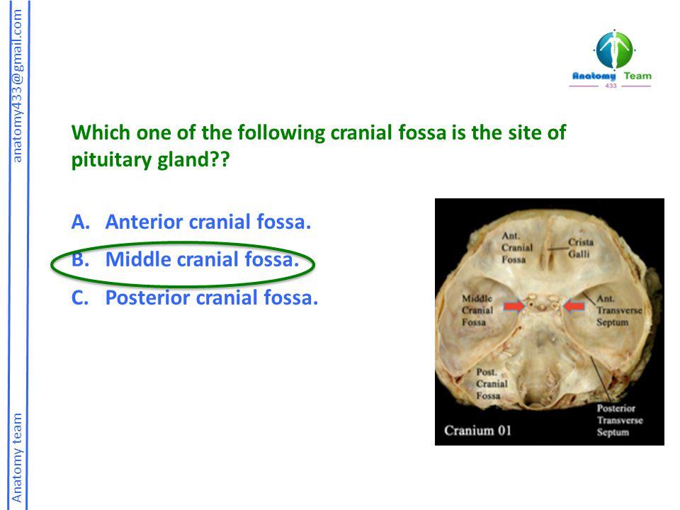 Anterior cranial fossa. Middle cranial fossa. Posterior cranial fossa.