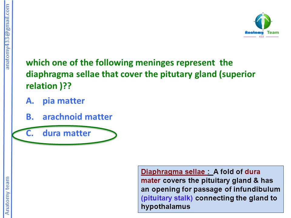 which one of the following meninges represent the diaphragma sellae that cover the pitutary gland (superior relation )