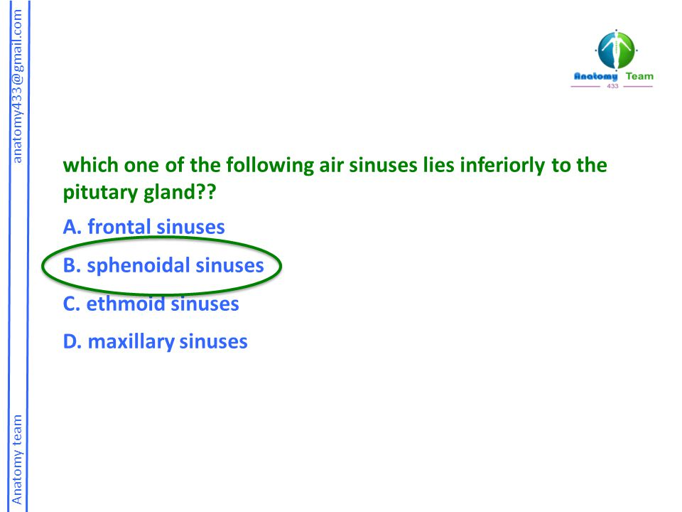 which one of the following air sinuses lies inferiorly to the pitutary gland
