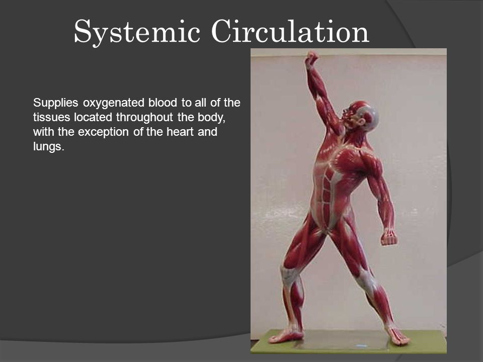 Systemic Circulation Supplies oxygenated blood to all of the tissues located throughout the body, with the exception of the heart and lungs.