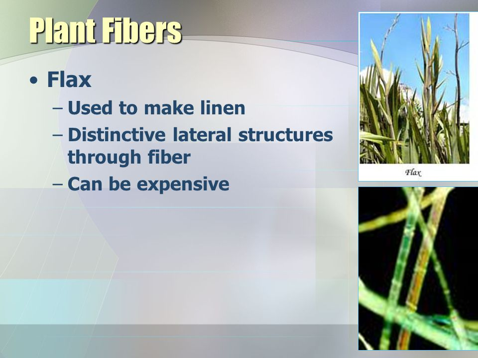 Plant Fibers Flax Used to make linen