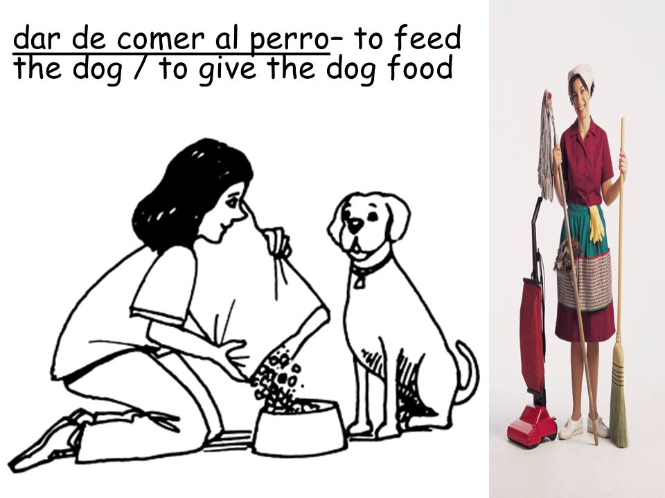 dar de comer al perro– to feed the dog / to give the dog food
