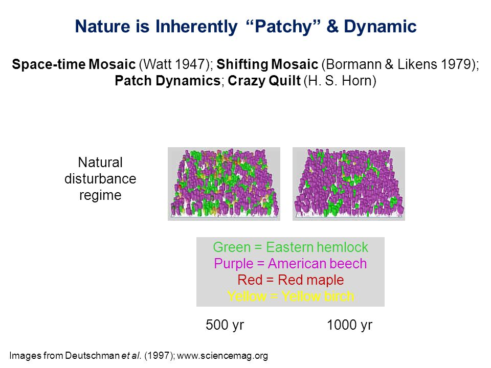 Nature is Inherently Patchy & Dynamic