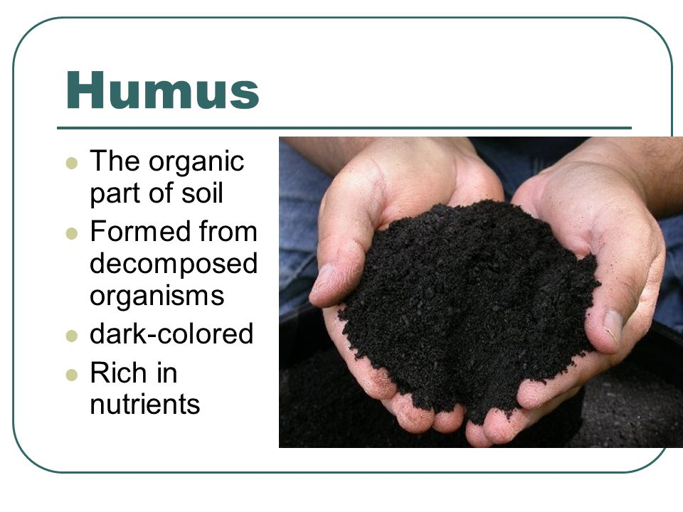Humus The organic part of soil Formed from decomposed organisms