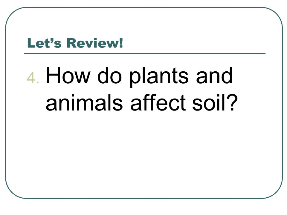 How do plants and animals affect soil