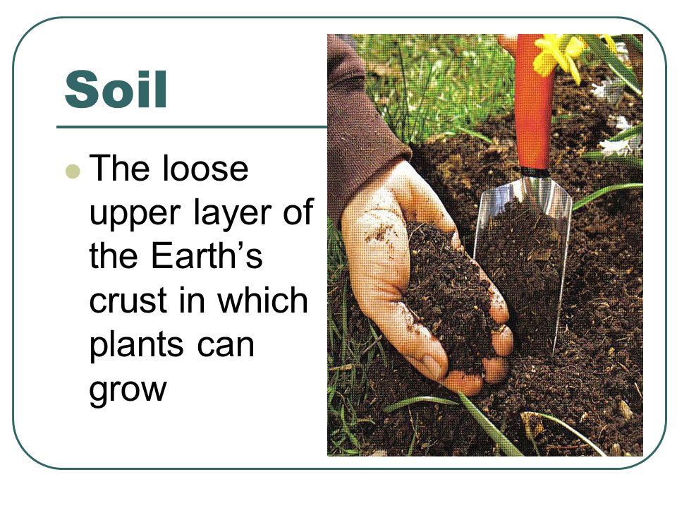 Soil The loose upper layer of the Earth's crust in which plants can grow