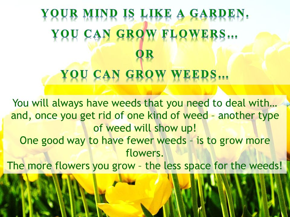 Your mind is like a garden.