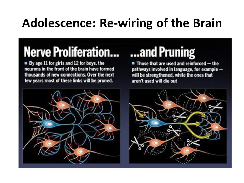 Adolescence: Re-wiring of the Brain