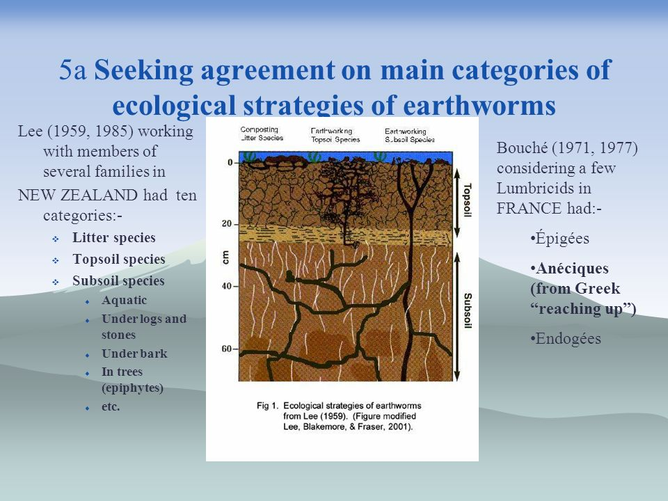 5a Seeking agreement on main categories of ecological strategies of earthworms