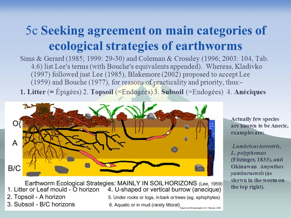 5c Seeking agreement on main categories of ecological strategies of earthworms