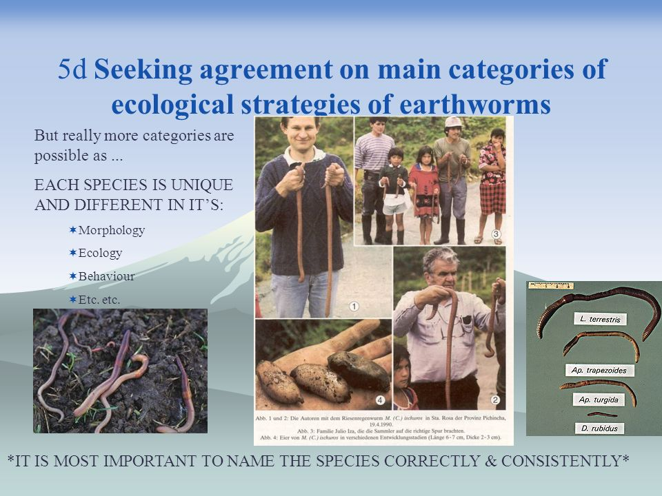 5d Seeking agreement on main categories of ecological strategies of earthworms