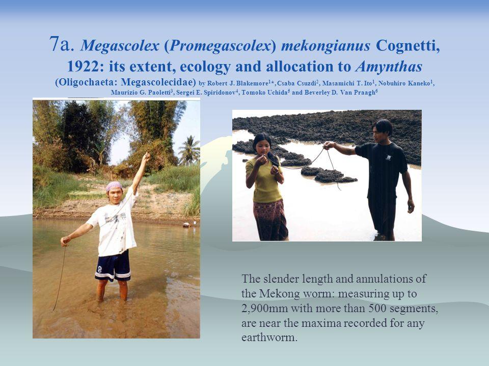 7a. Megascolex (Promegascolex) mekongianus Cognetti, 1922: its extent, ecology and allocation to Amynthas (Oligochaeta: Megascolecidae) by Robert J. Blakemore1*, Csaba Csuzdi2, Masamichi T. Ito1, Nobuhiro Kaneko1, Maurizio G. Paoletti3, Sergei E. Spiridonov4, Tomoko Uchida5 and Beverley D. Van Praagh6