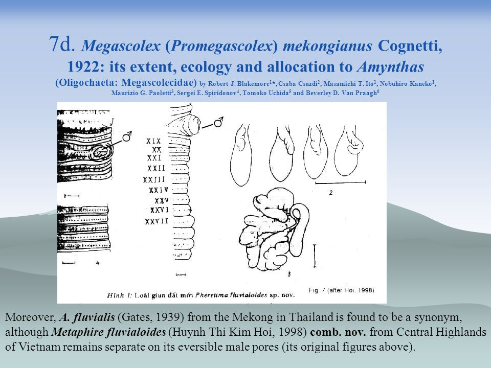 7d. Megascolex (Promegascolex) mekongianus Cognetti, 1922: its extent, ecology and allocation to Amynthas (Oligochaeta: Megascolecidae) by Robert J. Blakemore1*, Csaba Csuzdi2, Masamichi T. Ito1, Nobuhiro Kaneko1, Maurizio G. Paoletti3, Sergei E. Spiridonov4, Tomoko Uchida5 and Beverley D. Van Praagh6