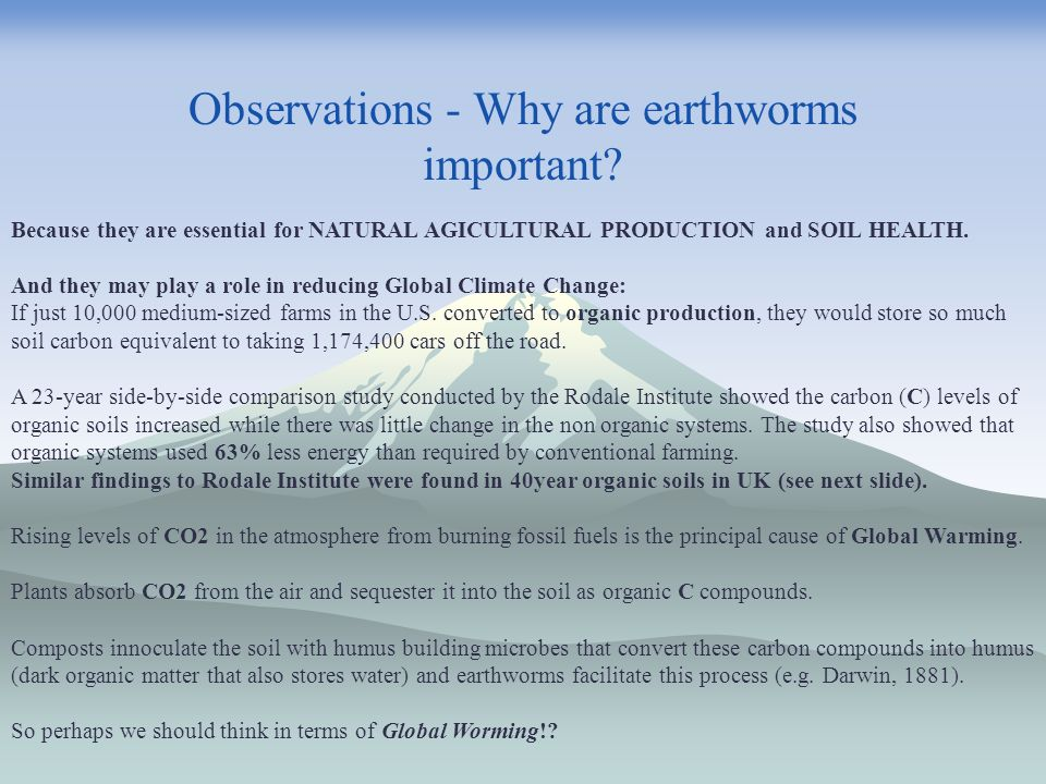 Observations - Why are earthworms important