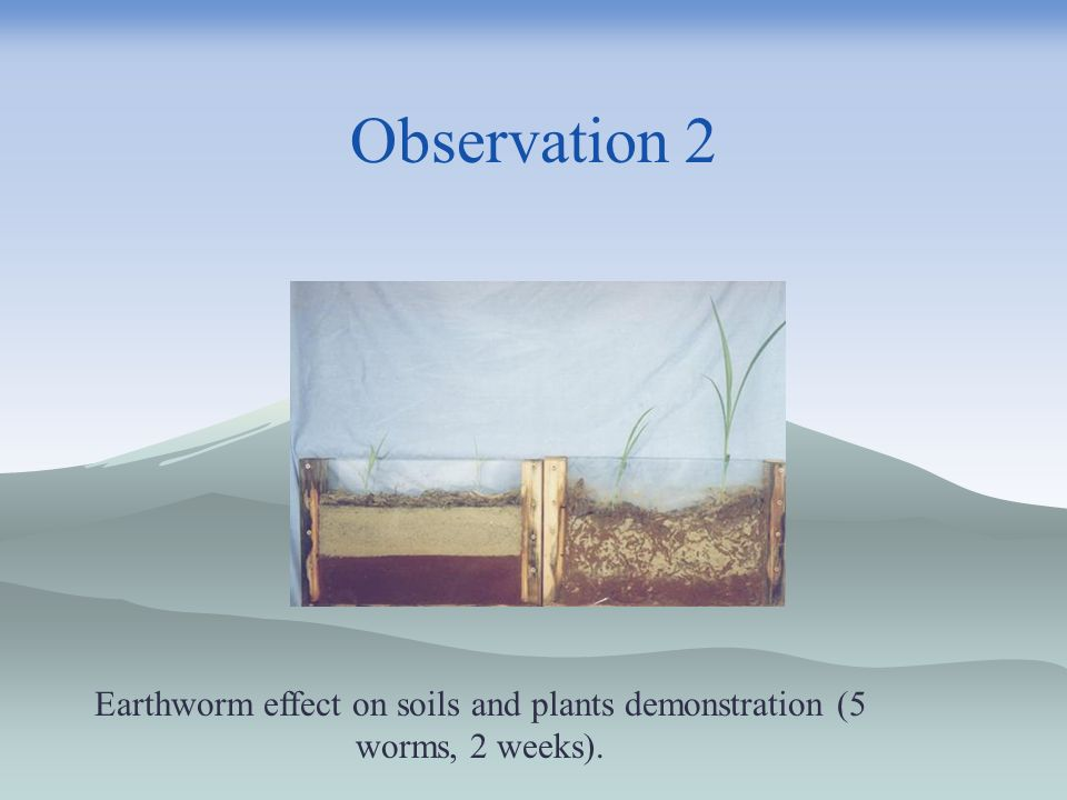 Earthworm effect on soils and plants demonstration (5 worms, 2 weeks).