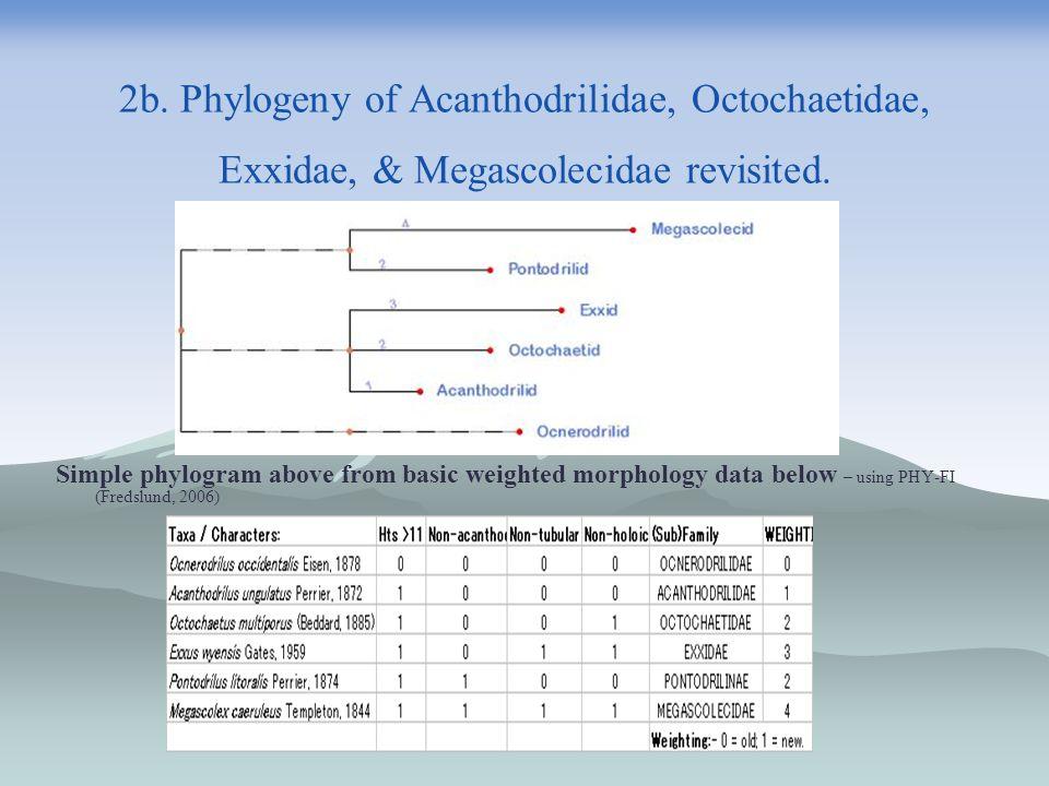 2b. Phylogeny of Acanthodrilidae, Octochaetidae, Exxidae, & Megascolecidae revisited.