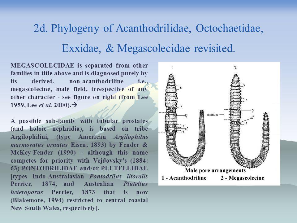 2d. Phylogeny of Acanthodrilidae, Octochaetidae, Exxidae, & Megascolecidae revisited.