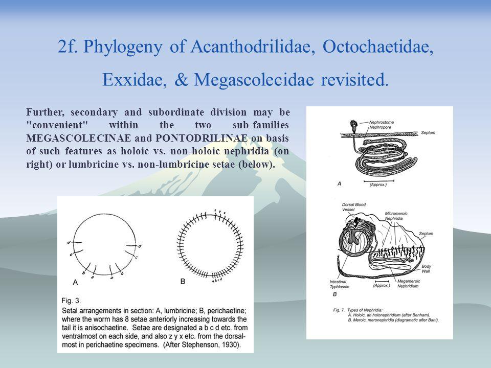 2f. Phylogeny of Acanthodrilidae, Octochaetidae, Exxidae, & Megascolecidae revisited.