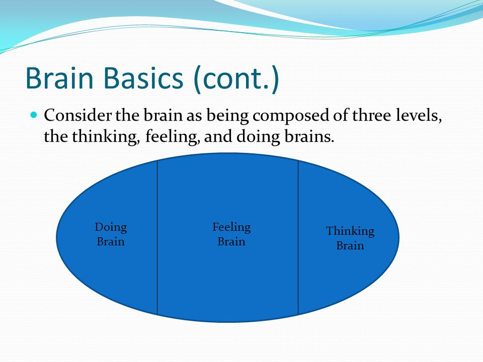 Brain Basics (cont.) Consider the brain as being composed of three levels, the thinking, feeling, and doing brains.
