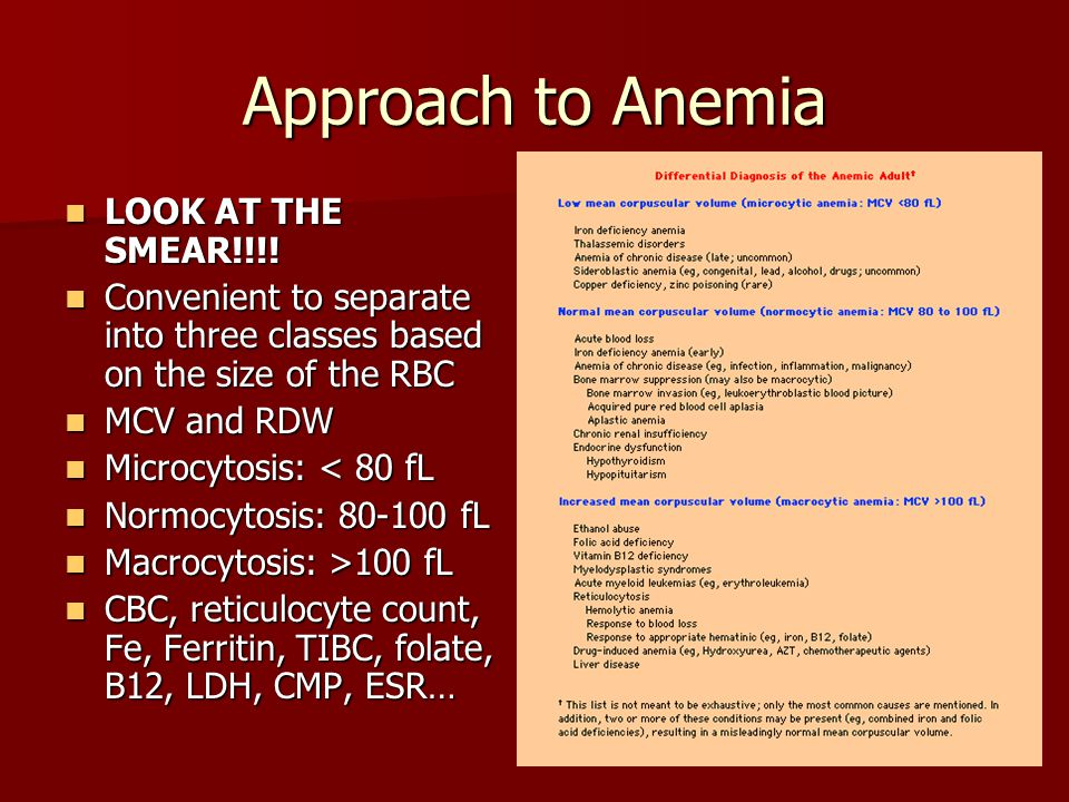 Approach to Anemia LOOK AT THE SMEAR!!!!