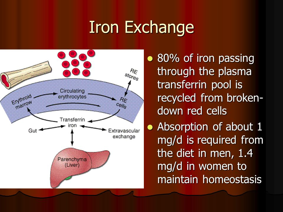 Iron Exchange 80% of iron passing through the plasma transferrin pool is recycled from broken-down red cells.