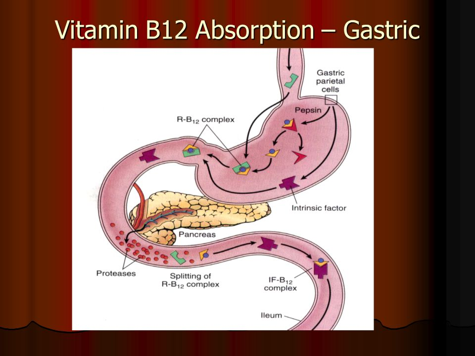 Vitamin B12 Absorption – Gastric Phase