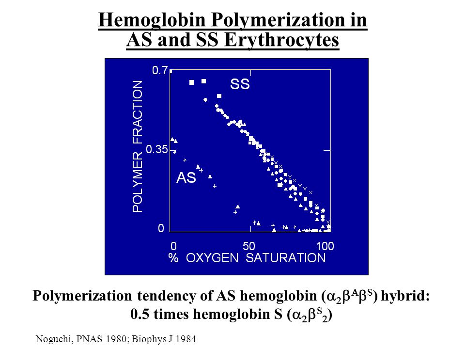 Hemoglobin Polymerization in AS and SS Erythrocytes