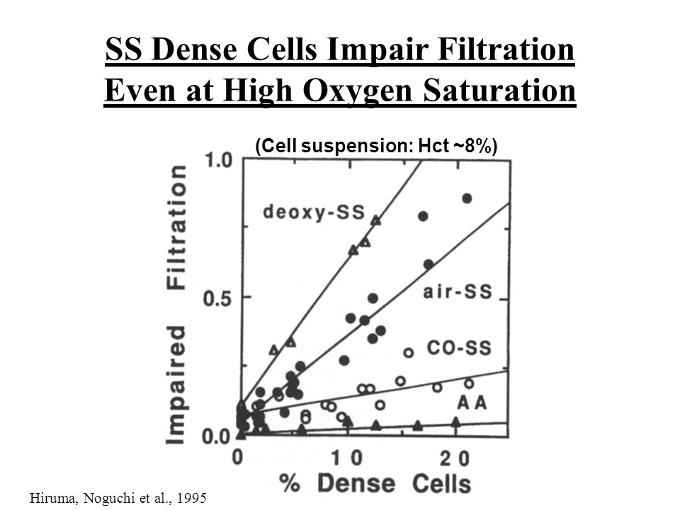 SS Dense Cells Impair Filtration Even at High Oxygen Saturation