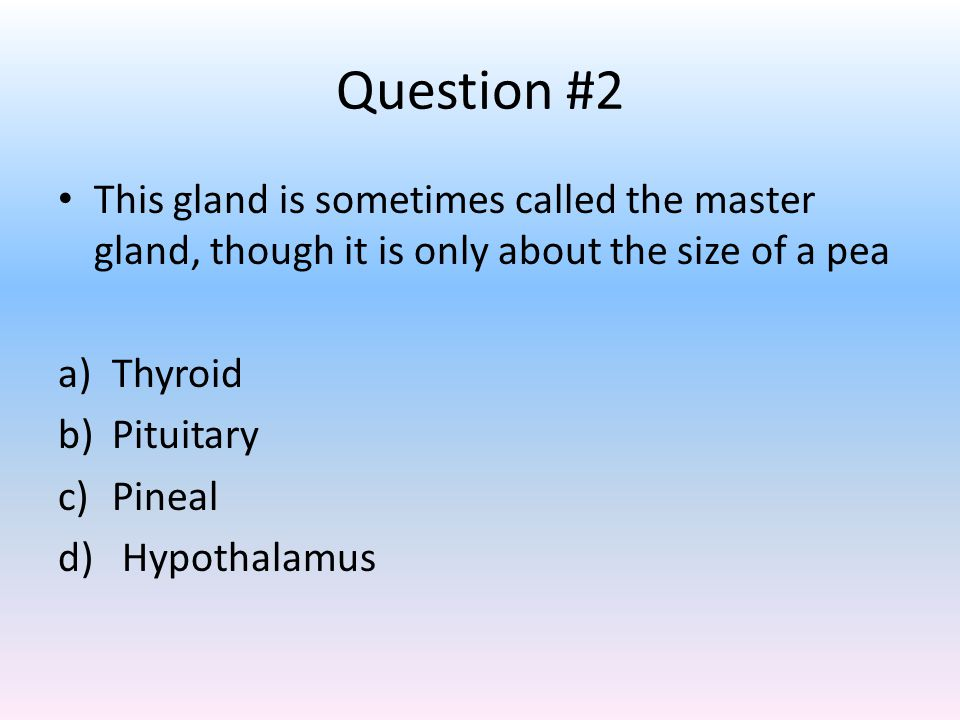 Question #2 This gland is sometimes called the master gland, though it is only about the size of a pea.