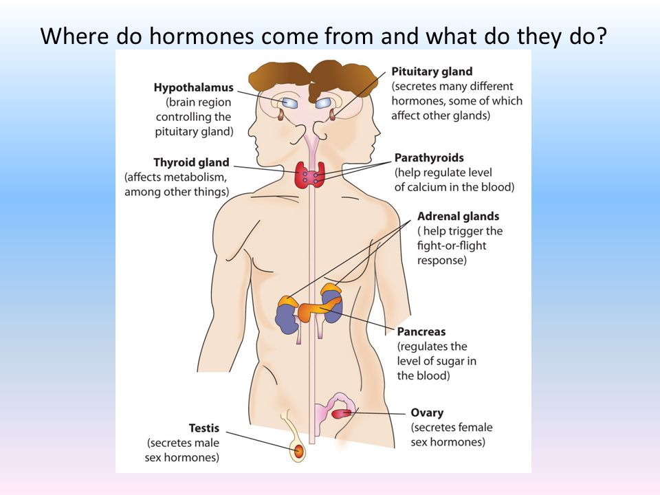 Where do hormones come from and what do they do