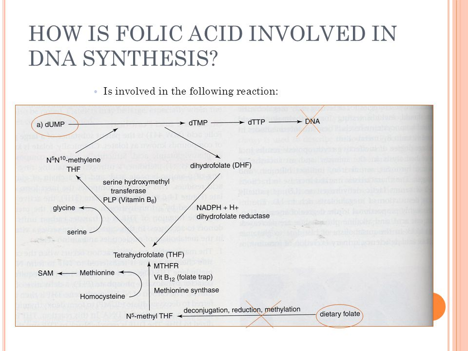 HOW IS FOLIC ACID INVOLVED IN DNA SYNTHESIS
