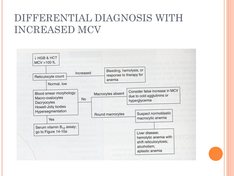DIFFERENTIAL DIAGNOSIS WITH INCREASED MCV
